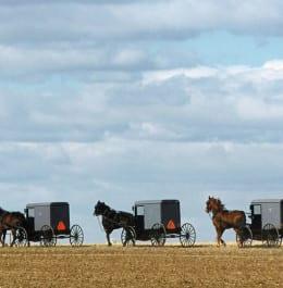 AmishBuggies-1680x896
