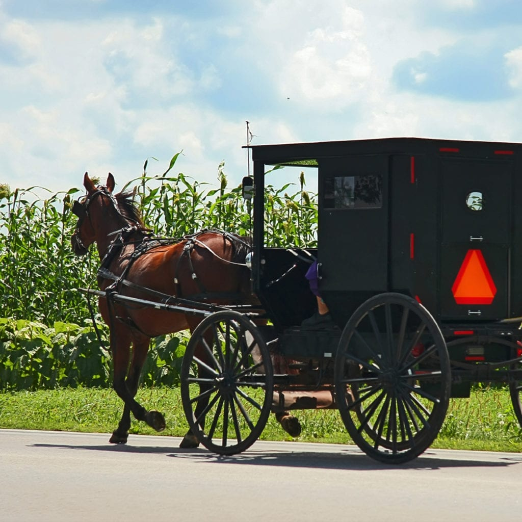 Amish Experience Buggy Ride