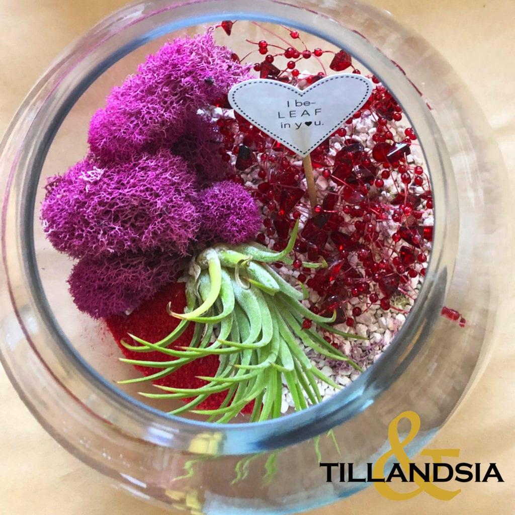 Plant & Terrarium from Tillandsia& in Leola, PA