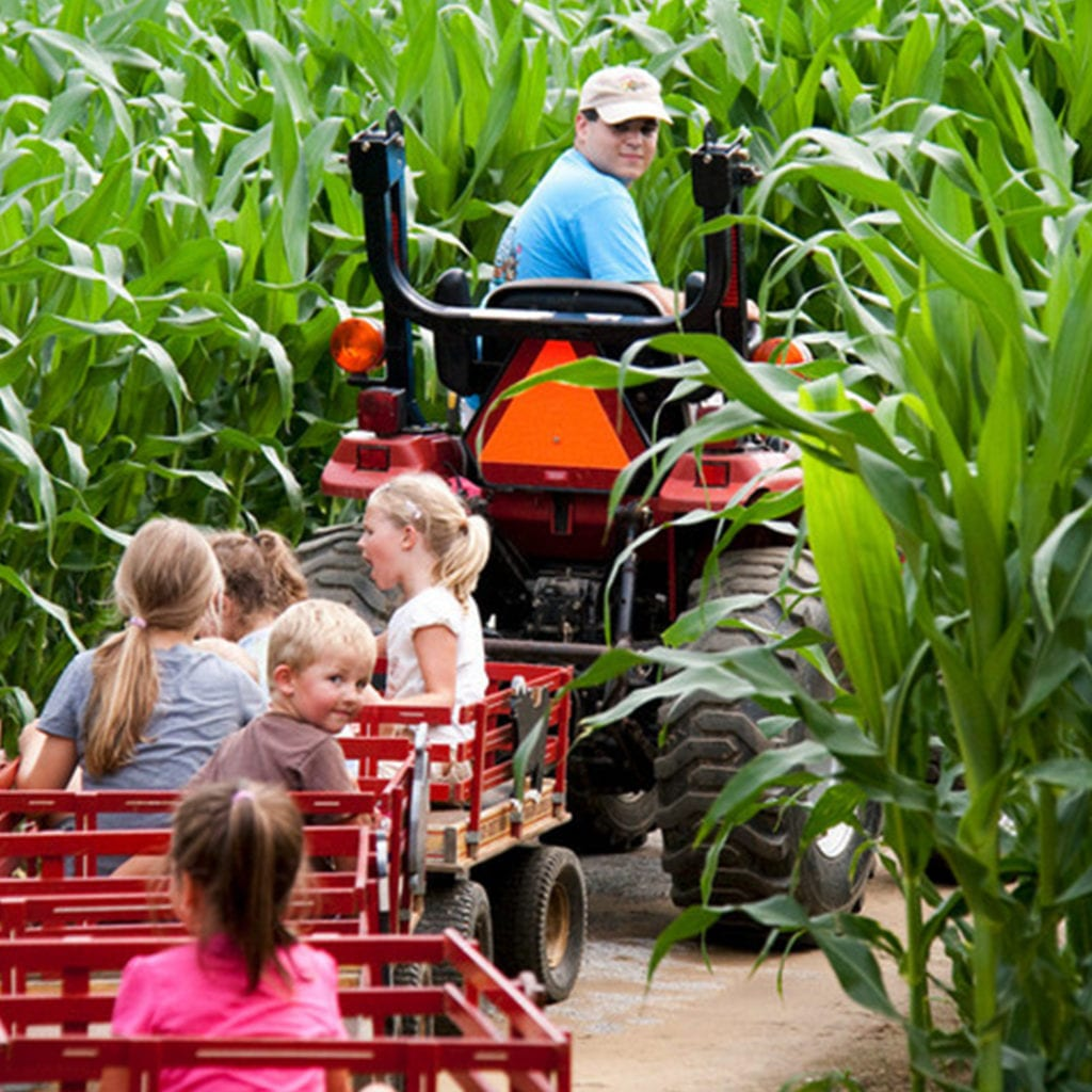 Children enjoying things to do outdoors at Cherry Crest Adventure Farm