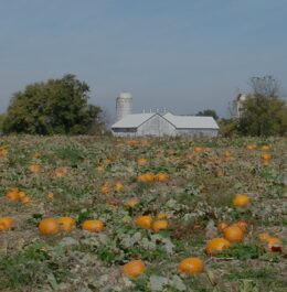Top 7 Things to Do in Lancaster County This Fall - Pumpkin Picking